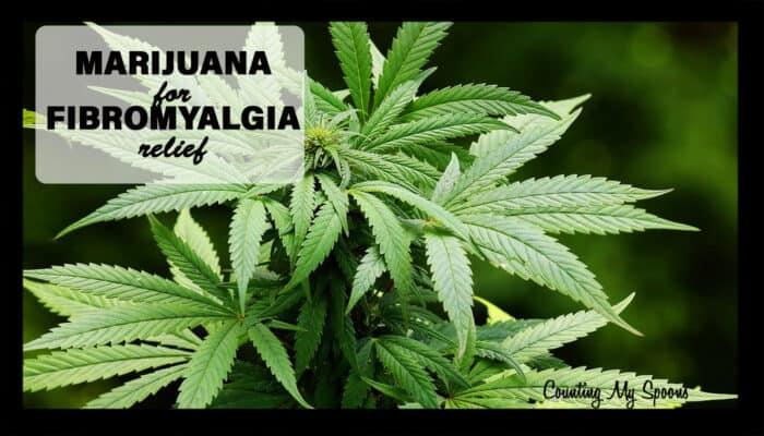 marijuana for fibromyalgia relief