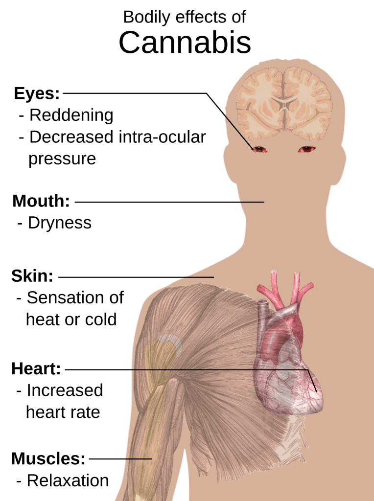 Medical effects of cannabis