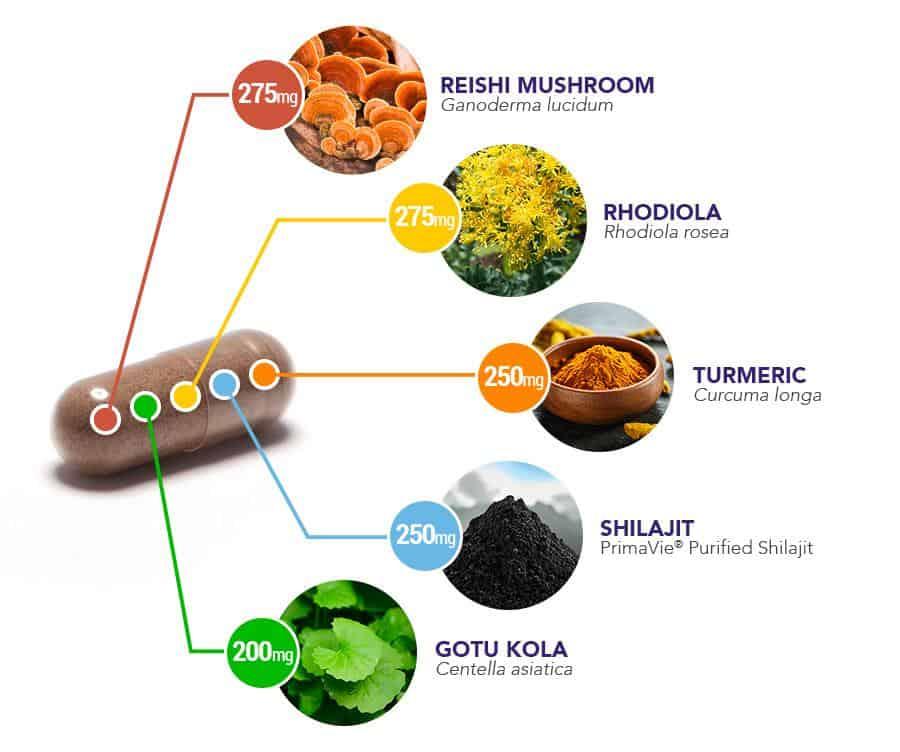Daily Herbal Capsule breakdown - ingredients